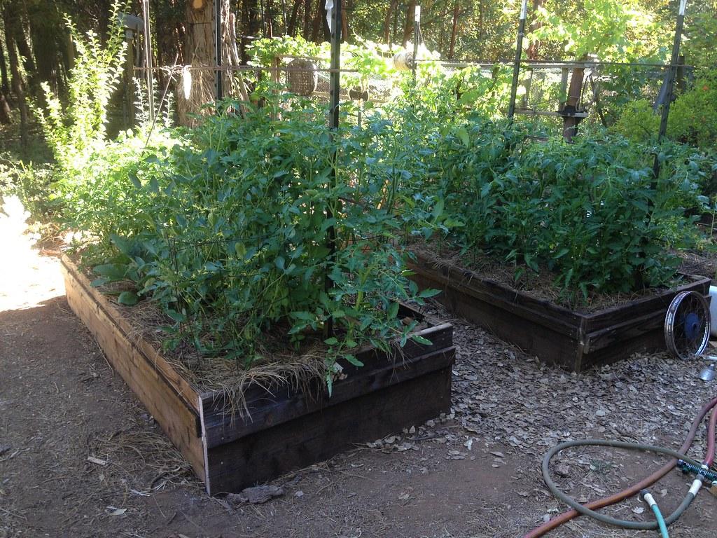 Raised Beds Tomatoes Southwestern Pa