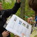 Tree Phenology Studies