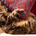 dphiffer-2012-05-11-01-9234