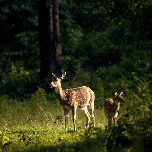 Glowing Deers! | by VinothChandar