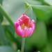 2012G.W. flower tour my garden 02