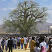 Crowd In Front Of Baobab At Festival Of Mariam Dearit, Keren, Eritrea
