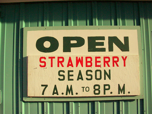 strawberry season | by greenleaf goods