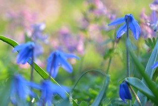 Spring, finally. | by | Blue Flower | Blaue Blume |