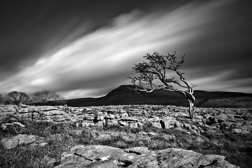 Twistleton Scar Tree and Ingleborough | by John Ormerod