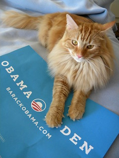 Handsome Obamacat | by Debbie Whitehouse