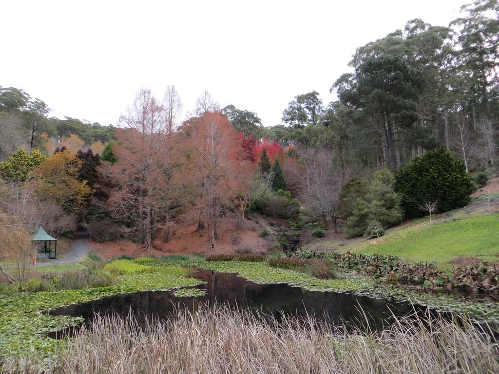 Mount Lofty Botanic Garden Le Sloth Flickr