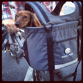 Bike Your Dog to Work Day | by Planetgordon.com