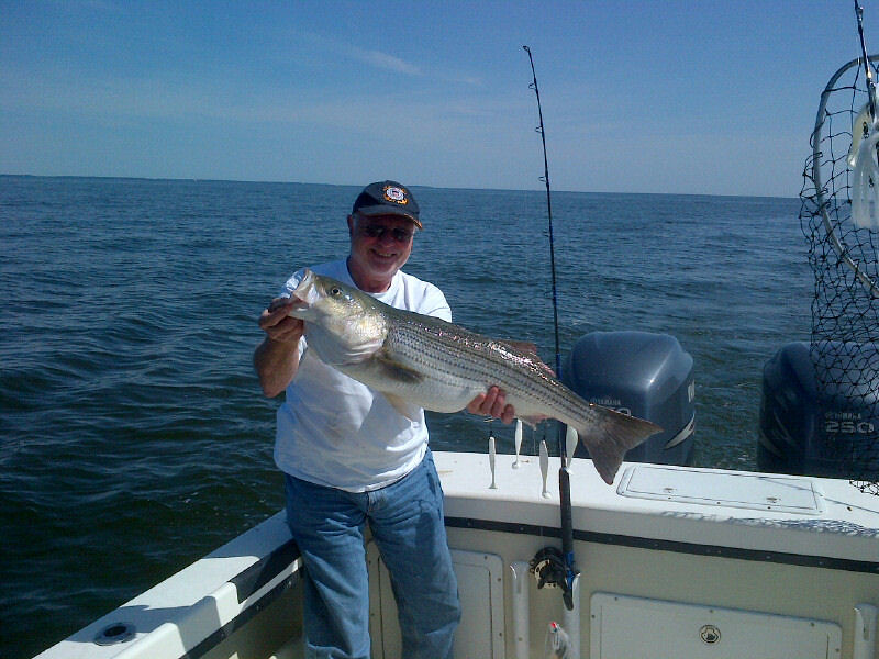 34 striped bass courtesy of david drutz maryland for Md dnr fishing report