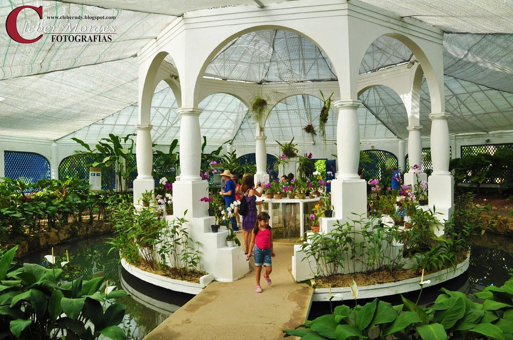 Orchidaceae Jardim Botânico  Rio de Janeiro  RJ  Brasil