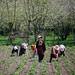 Springtime farming