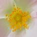 Innermost yellow   (Explored)