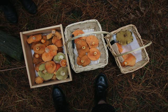 Mushroom foraging / YFM x Kinfolk