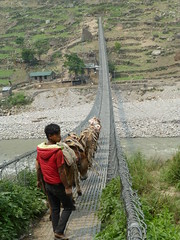 Boy with Mulis on Swingbridge