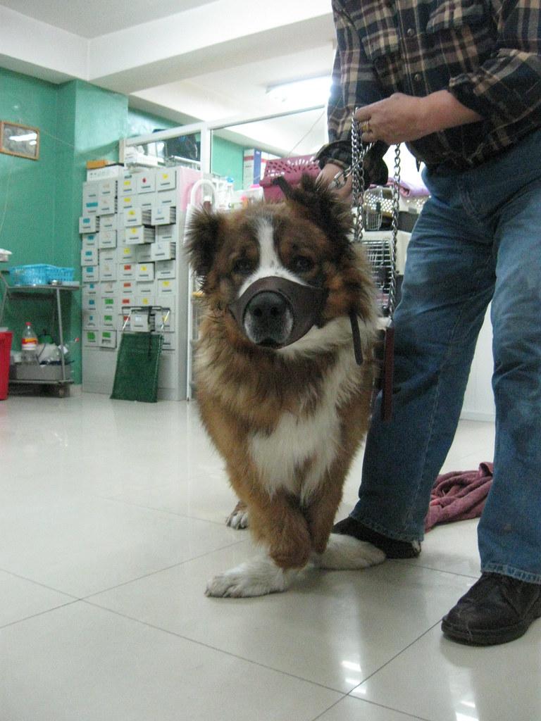 dog with rickets | Ben...