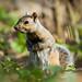 Squirrel in High Park