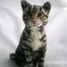 needle felted cat 021