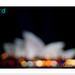 This week in focus.... Vivid Sydney!