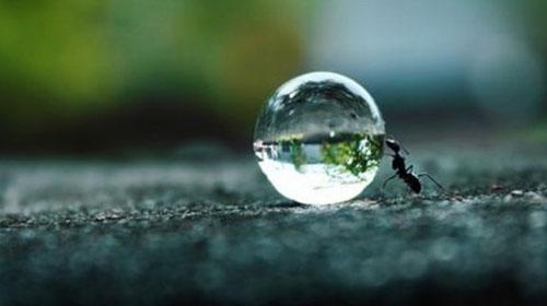 ant-pushing-water-drop...