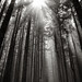 Inspirational Rays of Light