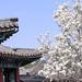 Tag 3 - Peking - Sommerpalast - Kirschblüte