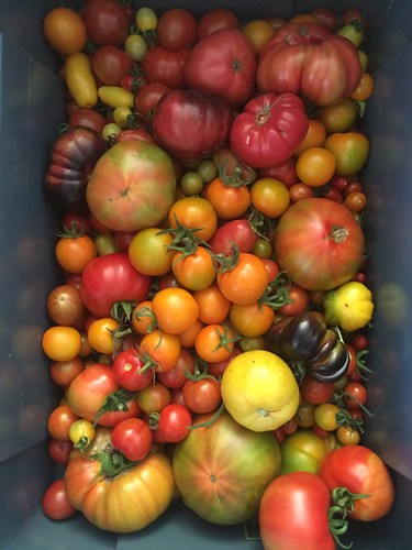 A tomato harvest from Farm Lab