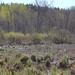 Lost Bay Wetlands