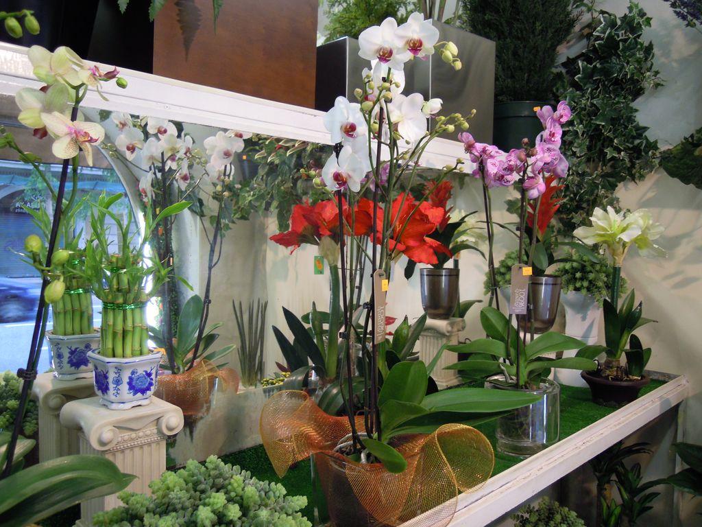 Orquideas floristeria flores y for Jardineria a domicilio barcelona