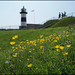 Buttercups at the lighthouse
