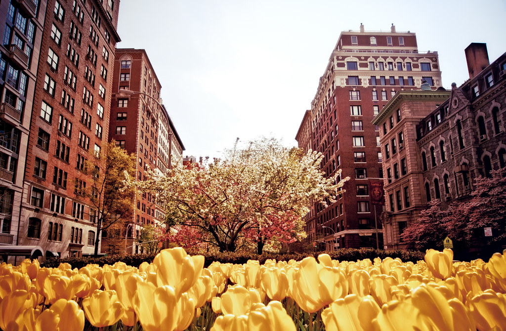 Spring On Park Avenue Upper East Side New York City