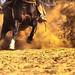 Horse - Full of energy