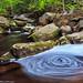 Enders swirl
