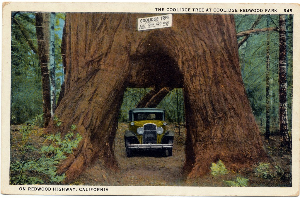 Postcard the coolidge tree at coolidge redwood park on th for Landscaping rocks stockton ca