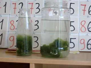 foto 4 alghe in basso in aula