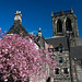 Cherry Blossoming Abbey