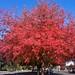 Fall colors in Lot J - 5