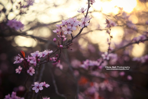 Blossom is Blooming | by Olivia L'Estrange-Bell