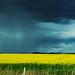 Rain comes ...