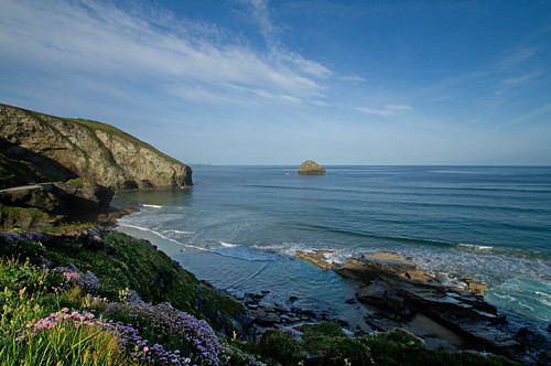 Flowers on Cornish Coast | by Mukumbura