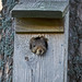 Squirrel in the birdhouse