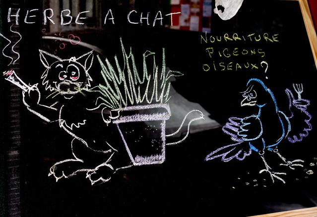 Herbe chat flickr photo sharing - Herbe a chat ...