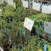 Hat House Herb Garden