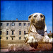Powerscourt Lion :: Wicklow, Ireland :: Éire Squared