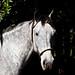 Horse portrait...