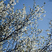 Day 70/365 Spring is Here!