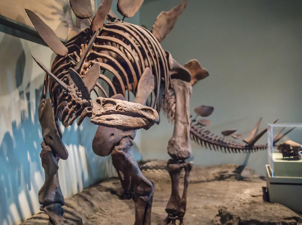 Stegosaurus Dinosaur Hall Field Museum Of Natural Histor