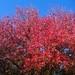 Fall colors in Lot J - 3