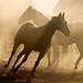 Black Horse Turning In Sunlit Dust