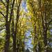 Autumn In Full Colour || ORANGE