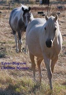 Monty Roberts Equus Online University - Have you Enrolled?